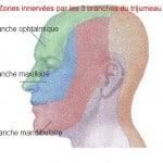 Zones_nerfs_trijumeau