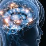 cerveau-350x350