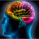 233990-idees-recues-mythes-cerveau