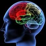 cerveau-humain--peut-retrecir