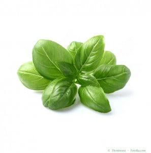 plant-de-basilic-en-pot