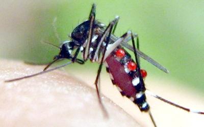 Pourquoi sommes-nous les proies des moustiques ?