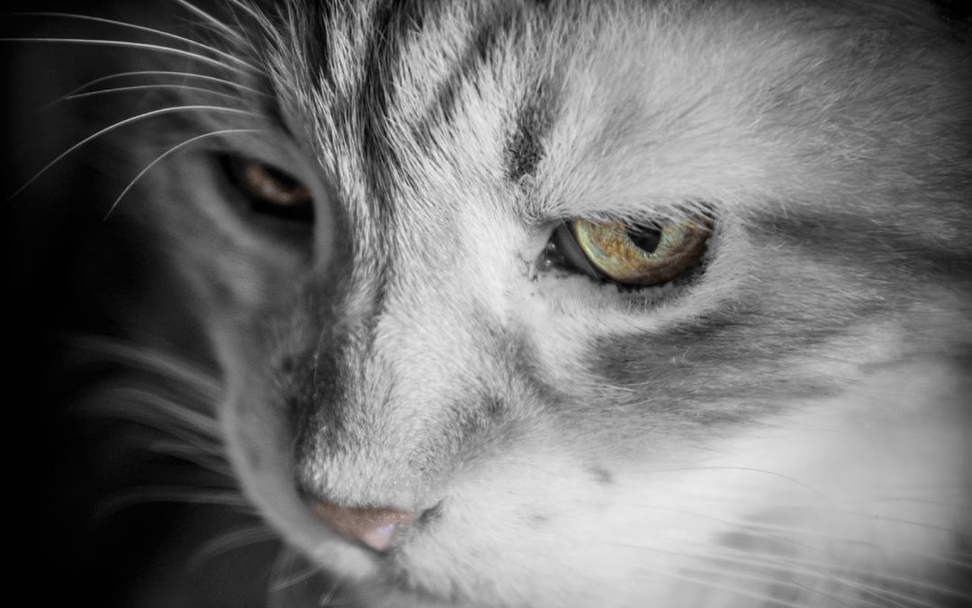 Pourquoi certaines personnes détestent-elles les chats